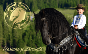 domeniul-cailor